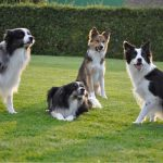 doggies-20150830