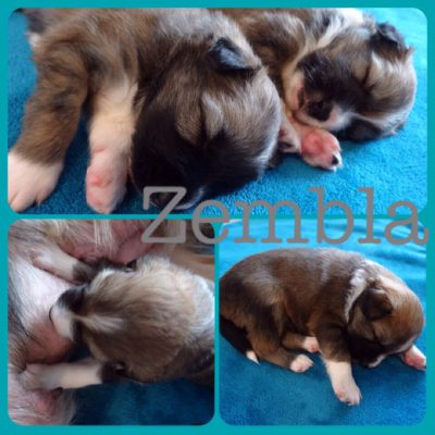zembla-pup-born